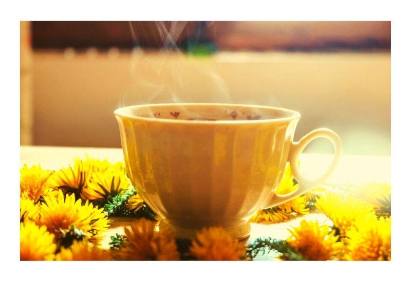 Dandelions: Weed, Flower, Herb or…Coffee Alternative?